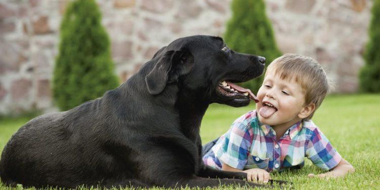 beneficios-perros-ninos