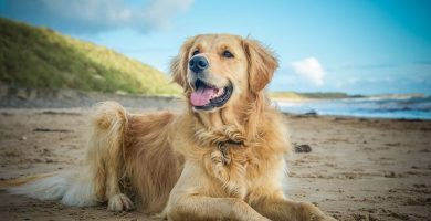 cuidados-perro-verano