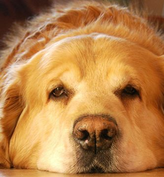 perro-triste