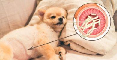 parasitos-en-perros