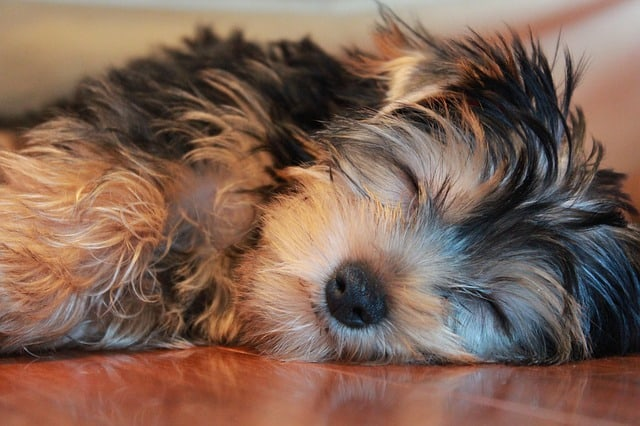 perro-tiembla-duerme