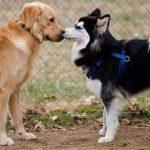 perros-feromonas