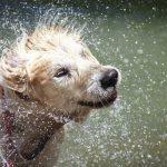 perro-mojado