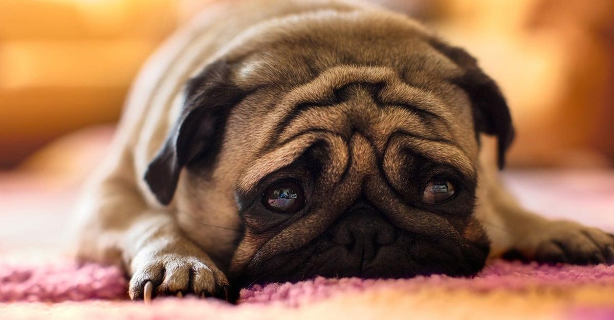 perro-triste-solo