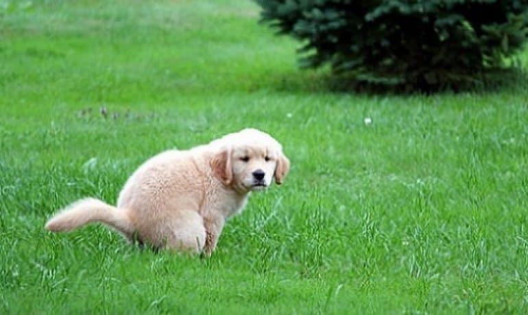 Dieta blanda para diarrea en perros