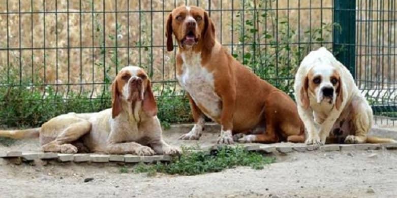 Tigre-Andino-Dos-Narices