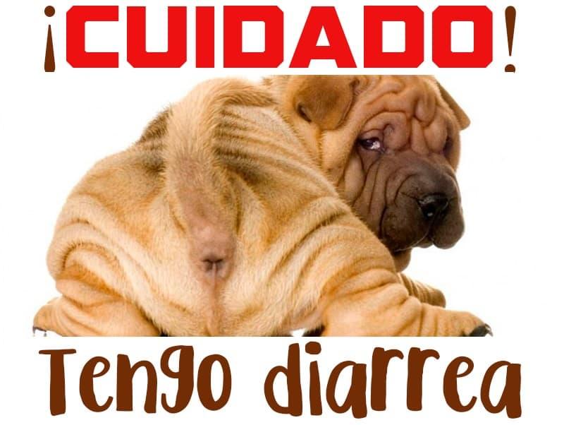 diarrea-en-perros