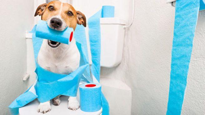 diarrea-en-perros2