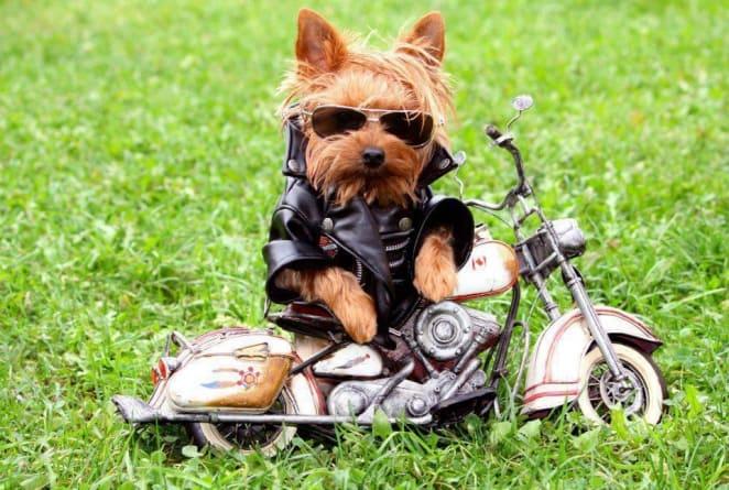 perro-disfrazado