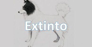 Perro-Oso-tahltan