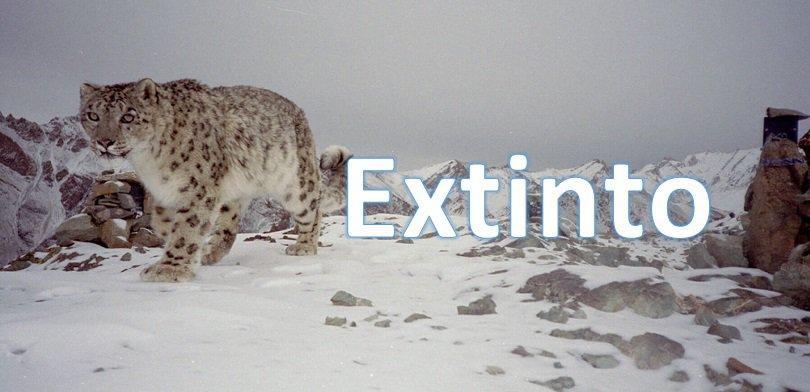 gato-esquimal