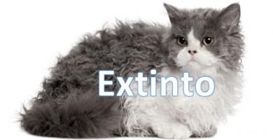 gato-rex-oregon