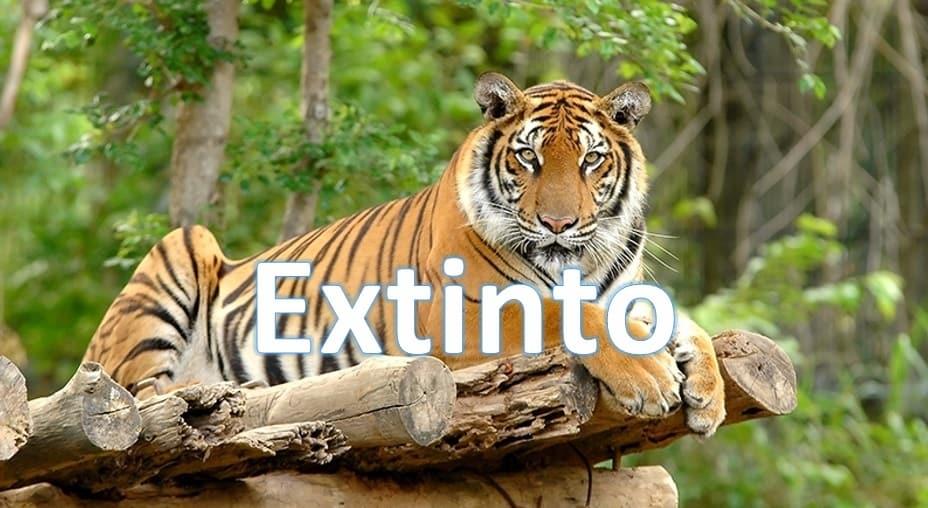 tigre-de-java