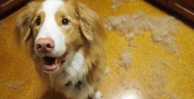 perro-pierde-pelo