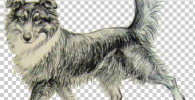 perro-indio-hare